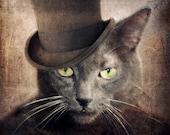 Russian Blue Cat Gray Cat Animal Photography Art Cat Top Hat Pet Portrait Gift for Cat Lovers 5x5 PRINT - Captain Grey
