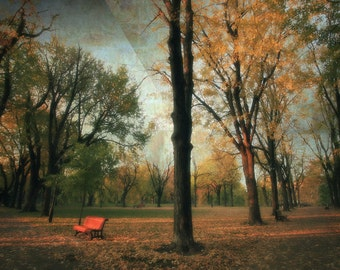 Montreal Art Parc Laurier Autumn Fall Photography Quebec Large Wall Art Trees Canadian Sellers - Fall's Crescendo