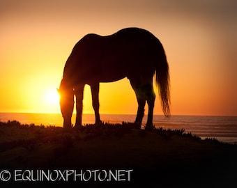 11x14 fine art horse metallic photograph