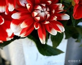 Dahlias, floral, red, white, kitchen art, bold, cheerful - SweetEventide