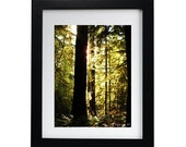 Evening Glow - 5x7 photo print