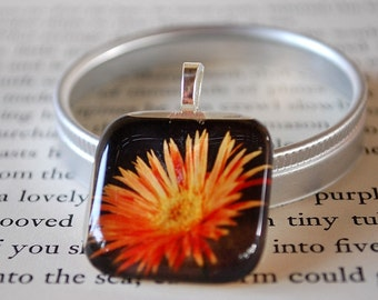 Coming Up Daisies Fine Art Photo Glass Tile Pendant