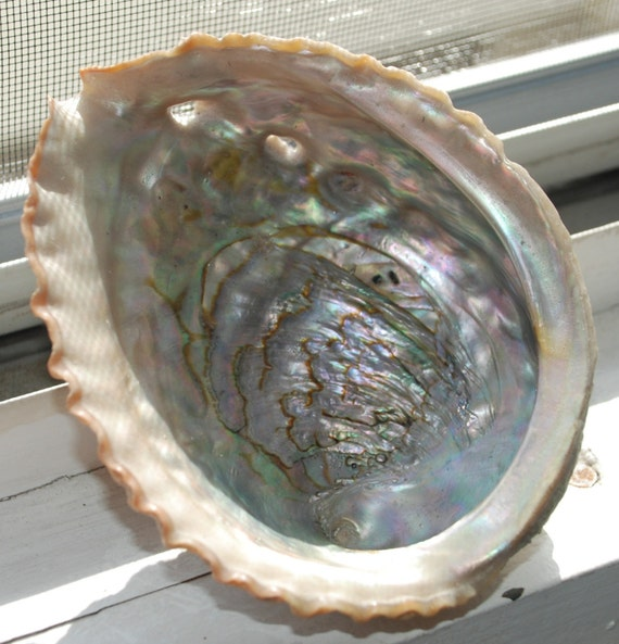 RESERVED for NELS1516 - Vintage Mother of Pearl Abalone Seashells