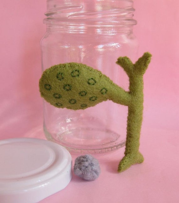 Gall Bladder in a Jar Anatomical Specimen