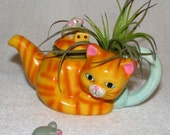 ORANGE KITTY and AIR PLANT ARRANGEMENT  -- LIVE PLANT TILLANDSIA BROMELIADS IN VINTAGE CAT TEAPOT