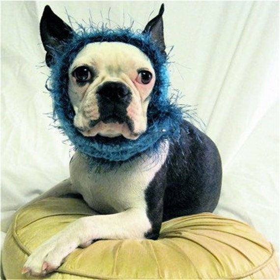 Dog Hat Glamour Pup Turquoise in Medium