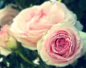 Time Gone By - 5x7 - Flowers, Roses, Pink, Vintage Antique Feel, Garden - Fine Art Photography Print