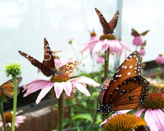 Butterfly Heaven - 5x7 - Butterflies, Pink, Flowers, Garden -Fine Art Photography Print