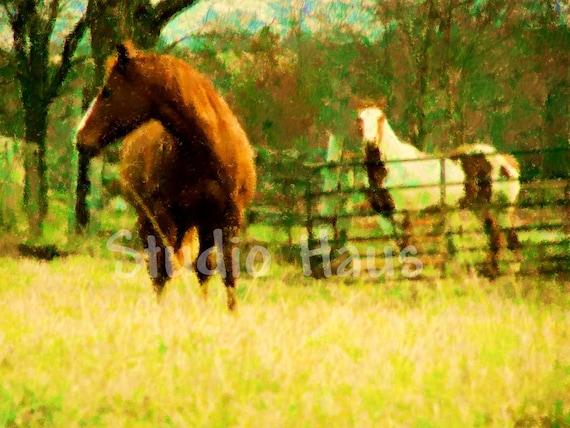 Horses - 5x7 - Animal, Field, Farm, Yellow, Autumn, Impressionism, Green, Nature, Outdoors -Fine Art Photography Print