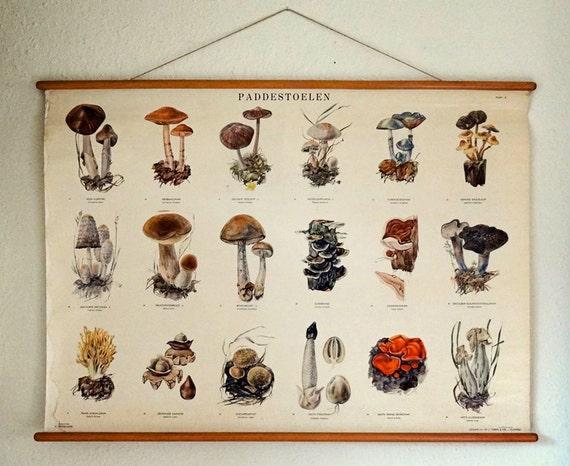 vintage botanical poster, mushroom identification chart from the Netherlands (no. 2)