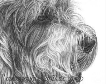 PBGV Dog Fine Art Note Cards - 4 pack