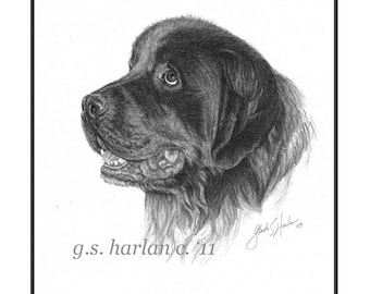 Newfoundland Dog Fine Art Note Cards - PACK of EIGHT