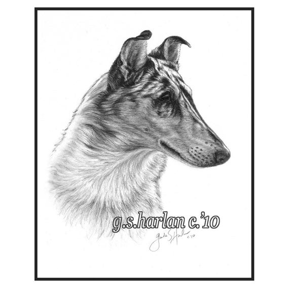 Smooth Collie Dog Fine Art Note Cards