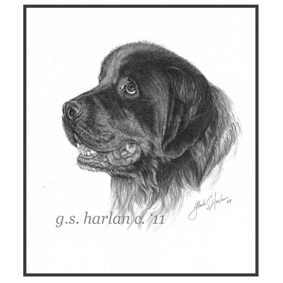 Newfoundland Dog Fine Art Note Cards - PACK of FOUR
