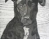 Black Labrador Retriever Mix, original black and white collograph print, dog art - Bruno 3