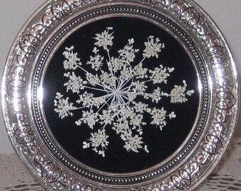 Pressed Queen Annes Lace on velvet
