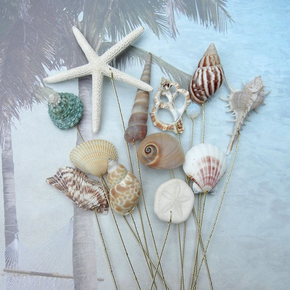 12 Naturally Colorful Large Seashells for Wedding Bouquets or Centerpieces
