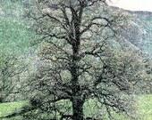 Grand Oak Photo Art