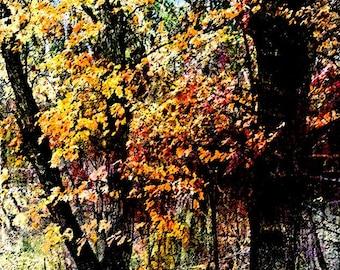 Oak 1.3 Photo Art