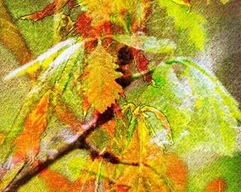 Oak 2.2 Photo Art