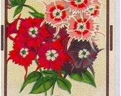 Antique Seed Packet, Phlox, c1915, colorlitho on paper.
