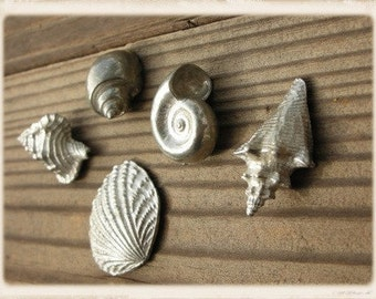 Seashells by The Seashore cast in pewter