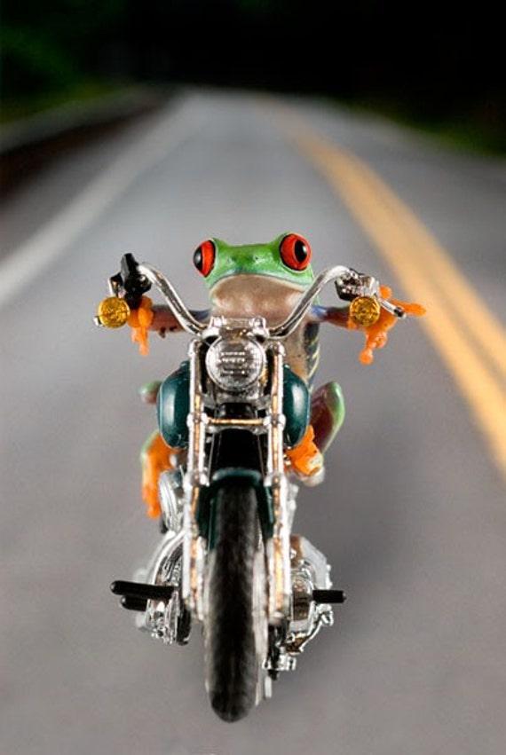 Hog Frog Harley Dyna Super Glide Motorcycle Photograph