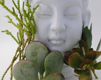 succulent plant cuttings set of 4 crassula variety desert eco garden