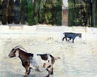 Goats, Art Print, Archival, 8 x 8, Farm, Wooden Door, Rustic, Cottage