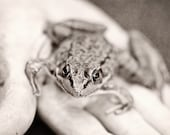 Black and white Photography Fathers Day animal Dad monochromatic nature Frog kids children men dude art boy grey gray stripes hand holding