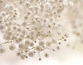 Macro Photography romantic wall art White decor shabby chic women winter cream neutral pale faded little flowers- Fine Art Photograph Print