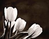 Black and White Photography Flower monochromatic flowers nature wedding home decor women 3 three tulips dark romantic soft spring photograph
