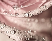Abstract Photography macro Spring Flower shabby chic romantic light pink rain water drops soft rose women for her - Fine Art Photography