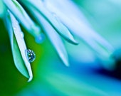 Macro Photography Water drops rain home decor for her turquoise green ice blue yellow mustard white cream spring - Refraction Fine Art Print