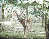 Animal Photography nature Fathers Day Deer woodland summer dude men children kids buck brown tan green woodsy - Fine Art Photography Print