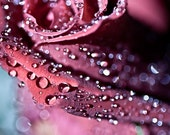Valentine's Day Red rose flower under 25 decor for her women burgundy sparkly sparkles romantic love rain water drops - 5x7 Fine Art Print