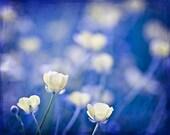 Nature Photography macro Spring wall art photo flowers cobalt blue yellow citrine women for her buttercups romantic - 8x10 Fine Art Print