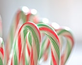 Christmas Photography macro art holiday winter food december candy canes children kitchen home decor wall art stripes colorful green red art