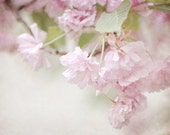Nature Photography Spring blossoms blooms Ready to ship wall art home decor Flowers shabby chic for her pale romantic light pink soft white