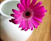 Pink Gerbera Daisy - 8x8 Fine Art Print - BOGO Sale