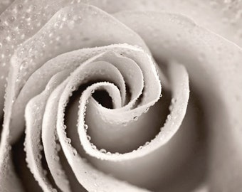 Black and White Photography Monochromatic nature macro Winter Spring flower romantic women decor for her grey gray silver rose - Fine Art