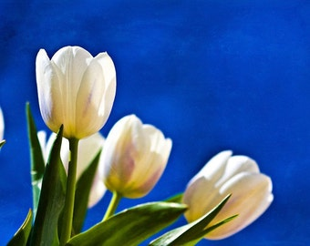 Mothers Day Photography nature macro White flowers blue green vivid colorful cream tulips 3 three romantic soft spring summer Fine Art Photo