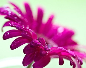 Macro Photography Flower art hot pink neon bright colorful vivid home decor rain water drops sparkles sparkly summer light green - Fine Art