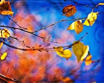 Nature Photography art Harvest Fall Autumn home decor under 25 for him men dude for her women gold golden orange cobalt blue yellow colorful