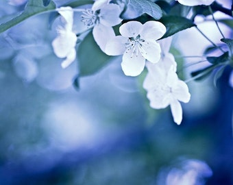 Nature Photography macro Spring art Blue white wall art home decor flowers romantic dreamy winter blossoms blooms photograph photo Fine Art