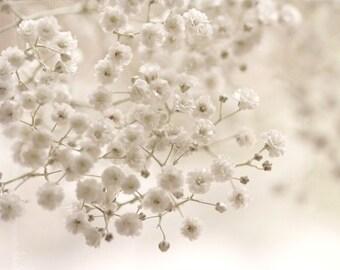 Macro Photography nature romantic home decor wall art White wedding flowers winter for her women cream Pale elegant photo - Fine Art Print