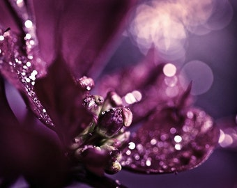 Macro Photography abstract art Purple plum sparkly sparkles romantic women for her flower photograph - Sparkles - 5x7 Fine Art Photo Print