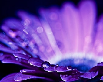 Purple plum black romantic water drops rain white blue flower photograph - Drops of Love - 4x6 Fine Art Photography Print
