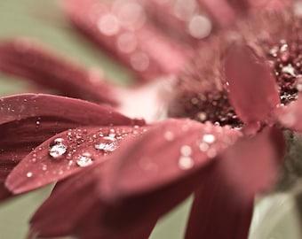 Macro Photography Autumn Fall rust rustic romantic rain water drops red green soft flower gerbera daisy photograph photo - Fine Art Print