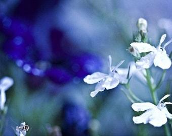 Nature Photography macro art Blue cobalt white for her women flowers rain water drops light romantic green spring Photograph Fine Art Photo